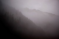 Foggy Forest and Mountains