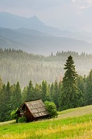 View over meadow, barn and montane coniferous forest habitat at sunset, Tatra Mountains, Western Carpathians, Poland, June