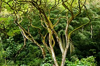 Twisted branches in a tropical rainforest