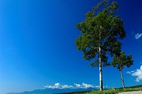 Grassland in Yatsugatake Ranch, Nagano Prefecture