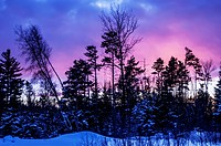 Silhouette of trees during a colourful sunset in winter, quebec canada