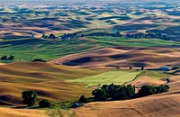 Rolling fields of wheat and barley of the Palouse region.
