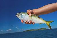 Hand holding a fish, boston massachusetts usa