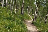 View from behind of male, mountain biker on trail in the woods