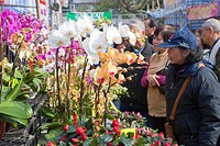 People shopping at the flower market, Tsuen Wan, Hong Kong