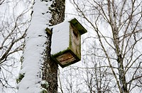 bird nesting box snowy attached birch tree winter
