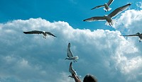 feeding the seagull with blue sky and clouds