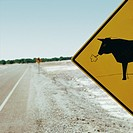 Cattle Crossing Sign Next to Road
