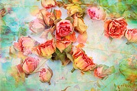 Dry roses beautiful vintage background