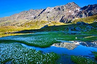 Laghetti Laiozz, Switzerland, Europe, canton, Ticino, Val del Coro, marsh scenery, scenery, cotton grass, blossom, cotton grass,