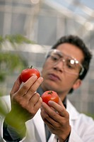 Low angle view of a male scientist examining two tomatoes