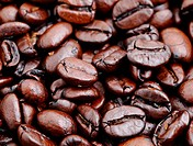 coffee bean closeup