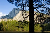 North America, USA, California, Sierra Nevada Mountains, Yosemite National Park, Half Dome, August, view from Yosemite valley floor, pine tree in fore...