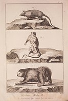 Plate showing armadillo, sloth and opossum. Engraving from Denis Diderot, Jean Baptiste Le Rond d'Alembert, L'Encyclopedie, 1751-1757. Entitled Histoi...