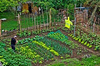 Vegetable garden with onions, lettuce, beans, fabas, Asturias, Spain