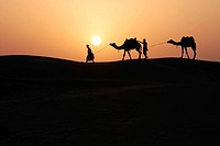 Two men dragging camels at sunset ; Khuri ; Jaisalmer ; Rajasthan ; India