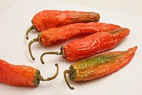 Indian spice in the form of one semi dried red pepper also known as chilly against a white background