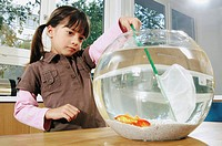 Girl trying to catch goldfish