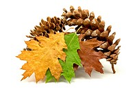 fallen leaves and pine cones