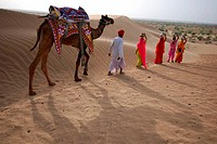 Women walking in desert with camel man ; Jaisalmer ; Rajasthan ; India