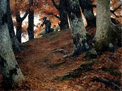 Autumn in the beech woods, 1902, by Stefano Bruzzi (1835-1911), oil on canvas, 62X82 cm.  Piacenza, Galleria D'Arte Moderna Ricci Oddi (Art Gallery)