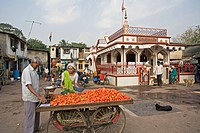 A woman buying tomatoes from a hand cart ; Santacruz ; Bombay now Mumbai ; Maharashtra ; India