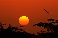 Sunset ; Jodhpur ; Rajasthan ; India