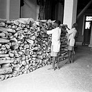 Year 1953 , sandalwood after being suitably dressed is stored in the distillery , sandal oil extracting factory , Mysore city , Karnataka , India