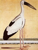 Birds ; Open Beaked Stork ; India 1995