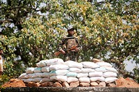 Police point of Central Reserve Police Force CRPF soldier in hunt of naxalites in forest of Jharkhand ; India NO MR