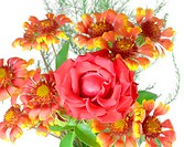 Blossom flowers with red rose