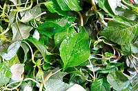 Vegetable , chauli leaves