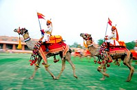Camel parade ; Jodhpur ; Rajasthan ; India NOMR