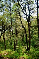 Thicket forest near sitlakhet uttarakhand India Asia