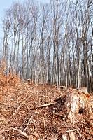 Wald abgeholzt
