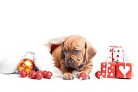 Young Dogs and christmas decoration