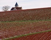 Tonw of France, Burgundy, Yonne, Préhy and its famous church lost in the vineyards