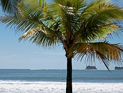 Central America, Costa Rica, Palm tree on beach at Puerto Carrillo