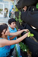 School Children learn about and tend the vertical garden at a charter school in Los Angeles, California, USA
