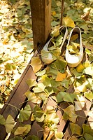 Fallen Leaves with Shoes