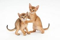 Two kittens nestling up