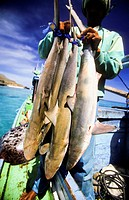 fisherman holding shark catch