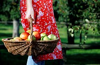 Woman carrying basket with apples