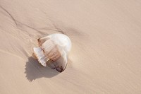 A jellyfish lays in the white sand after being washed ashore.