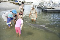 Indo_Pacific humpback dolphin swimming close to wharf at Norman Point to interact with and be hand fed by residents and visitors Tin Can Bay, near Gym...