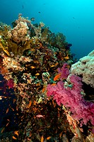 Tropical underwater scenery in the Red Sea.