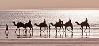 Australia, Western Australia, Broome, sunset camel ride at Cable Beach