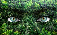 Green forest and human eyes _ Save nature concept