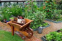SMALL VEGETABLE GARDEN IN SUMMER