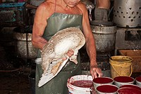 Geflügelmarkt, Penang, Malaysia, Südostasien Market poultry, Penang, Malaysia, Southeast Asia
